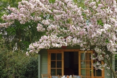 Cherry Blossom by the Garden House