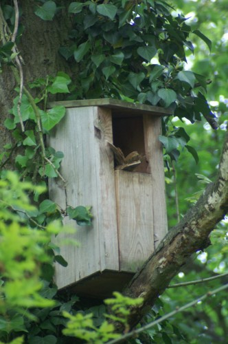 Owl Box - with tail sticking out