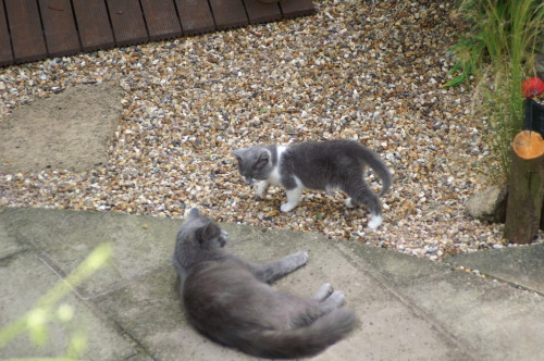 Smokie and Tiggy's first meeting