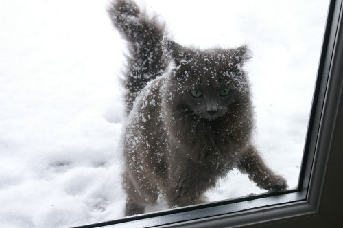 Smokie, having had enough fun in the snow