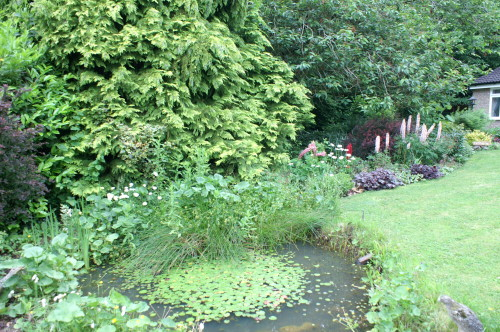 The Pond and Lupins