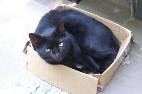 Bertie in a smaller box