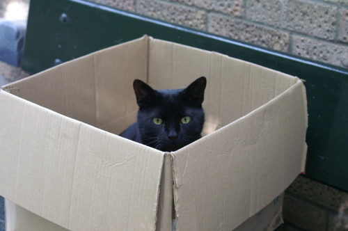 Bertie in a box